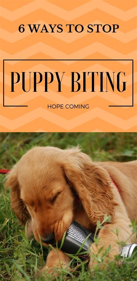 how to your not to chew on everything best 25 stop chewing ideas on puppy teething furniture and puppy