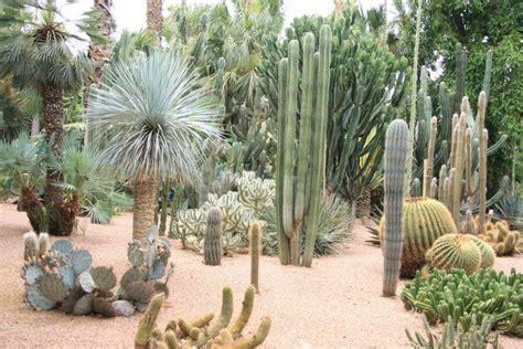 imagenes de jardines con cactus dise 241 o de jardines con cactus