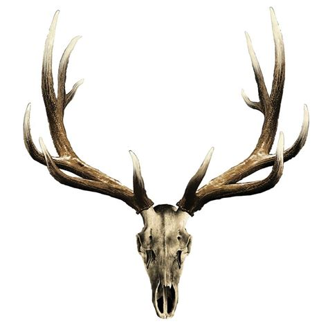 elk skull tattoo 25 best ideas about elk on stag