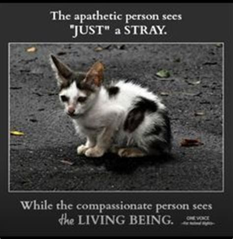 Thanks Aunties We Are The Cat In The Flickr by 17 Best Images About Ideas On Cats Adoption