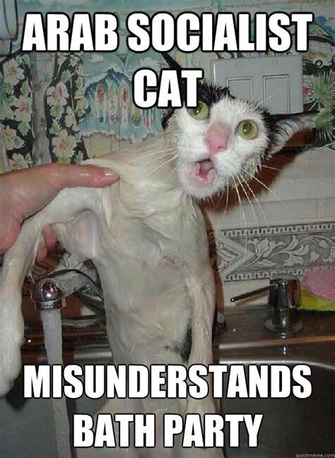 Bath Meme - kitten bath memes