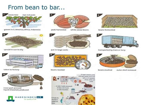 chocolate from bean to bar to s more books introduction to the nothing like chocolate 13052014