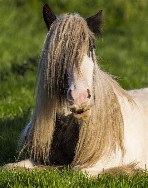 Sho Kuda Yang Buat Manjangin Rambut vannel kuda dengan kumis kuda paling