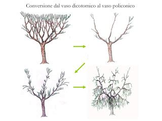 vaso policonico potatore i olivi