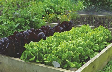 growing vegetables 8 top tips from de thame