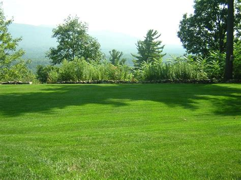 choosing the right turf grass for your lawn homeowner offers