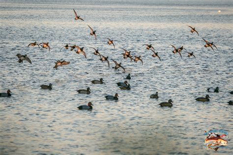 duck hunting boats florida 30a guide service fishing and duck hunting charters in