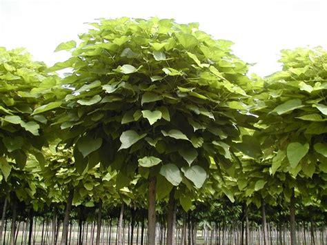 piante da giardino antizanzare piante antizanzare da balcone o da interno le 5 migliori
