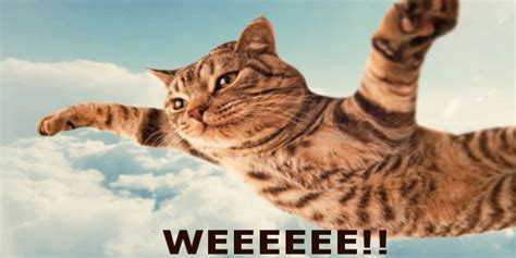 Flying Cat Meme - the 15 absolute best flying cat memes on the internet