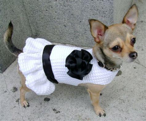 moldes de vestido perro consejos de fotografa c 243 mo hacer ropa para perros mascotas