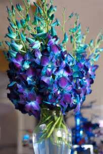 blue dendrobium orchids dyed blue dendrobium orchids 1 flickr photo