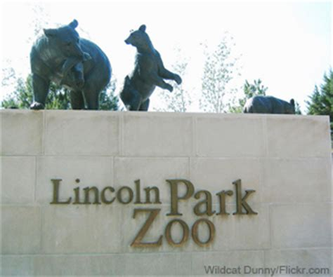 groundhog day lincoln park zoo guide to lincoln park zoo chicago