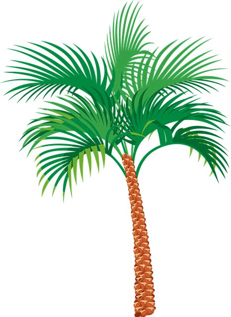 vector graphic palm tree exotic vacation