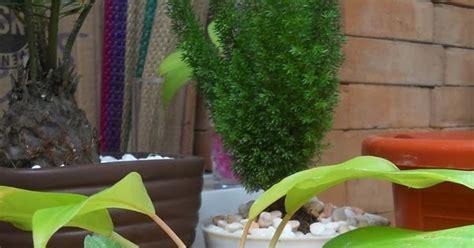Jual Hidrogel Bali putra garden promo tanaman hias hidrogel unik untuk