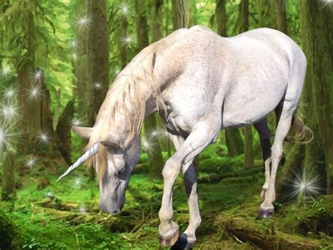 imagenes de unicornios de verdad treecreativity com unicornios
