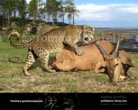 Prehistoric Jaguar European Jaguar Panthera Gombaszoegensis