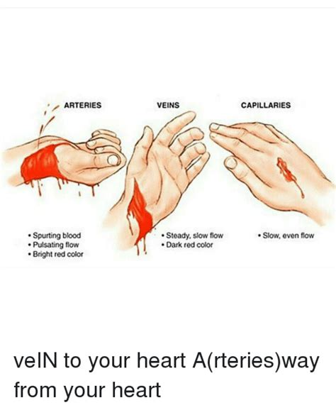 what color are arteries arteries spurting blood pulsating flow bright color