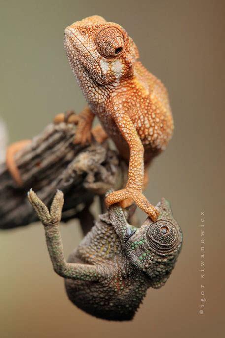 cute baby lizard pictures lizard types