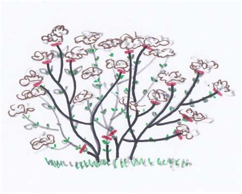 come potare le ortensie in vaso ortensie hydrangea potatura ortensia macrophylla