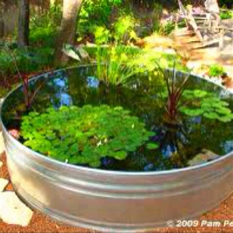 frog pond backyard 17 best images about frog pond ideas on pinterest