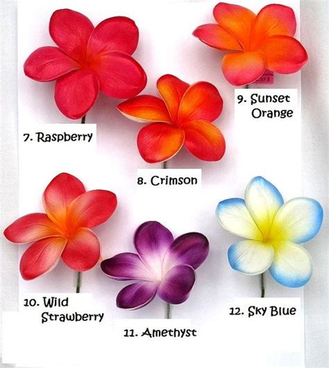 plomeria significado best 25 plumeria flowers ideas on pinterest colorful
