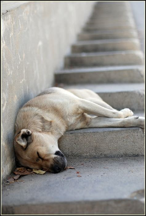 how many hours of sleep do dogs need how many hours of sleep do you need to study effectively penn state world cus