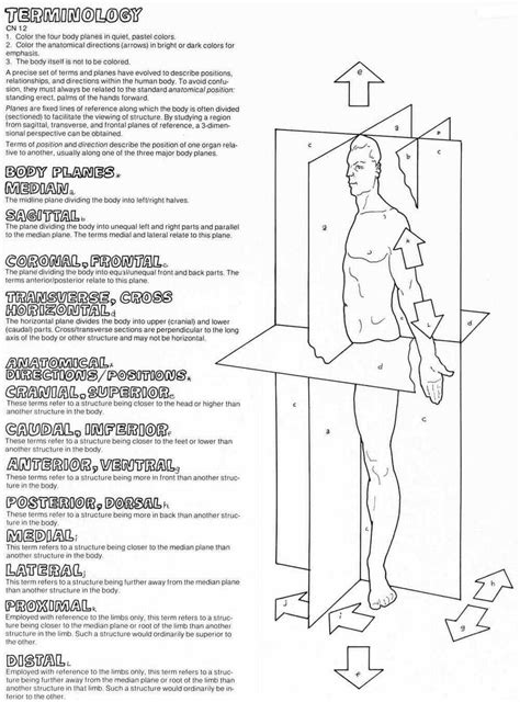 Anatomical Terms Worksheet by Anatomical Directional Terms Of The Anatomy