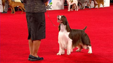 purina show 2017 purina show 2017 breed results breed dogs spinningpetsyarn