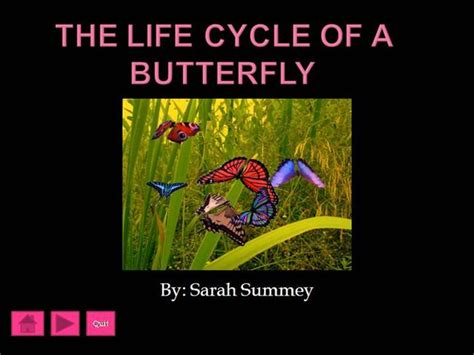 ppt the life cycle of ladybugs powerpoint presentation the life cycle of a butterfly authorstream