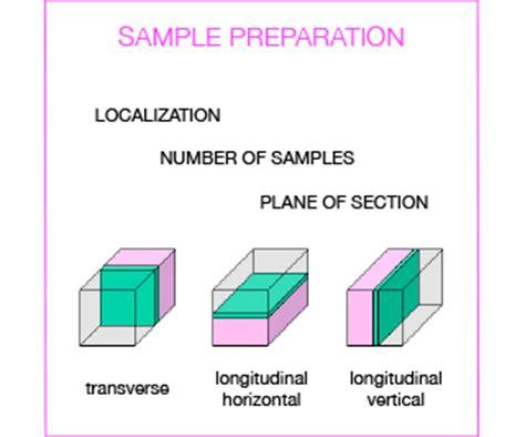 sectioning in histology istopatologia info tecniche servizi scientifici