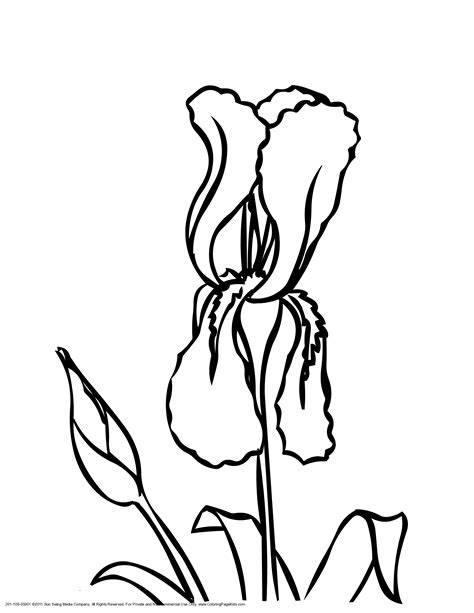 coloring pictures of iris flowers iris flower coloring page coloring home