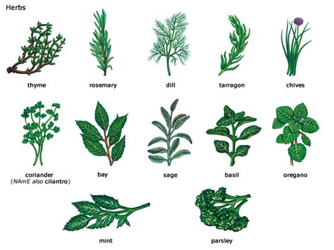 identification of herbs wildr pdf herb guide from the 12160 lost files 12160 social