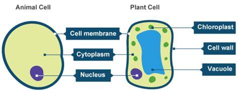 biology  emaze