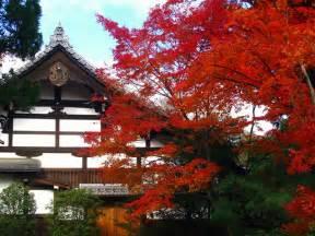 japanese nature