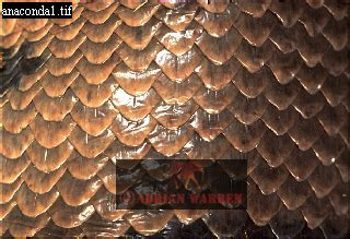 patterns in nature documentary image gallery of shapes patterns and backgrounds from