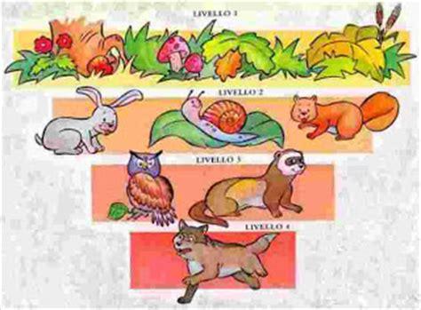 la catena alimentare scuola primaria compiti per casa 5 e ecosistemi e catene alimentari