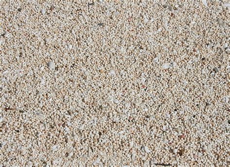 Light Sand by Basics Coastal Care