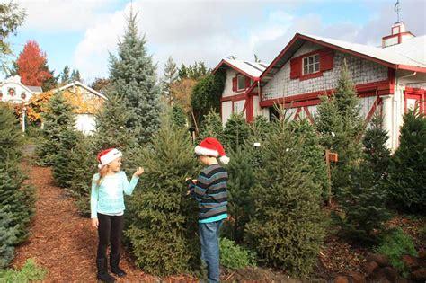 ponzi christmas trees marin u cut tree farms in sebastopol marin mommies