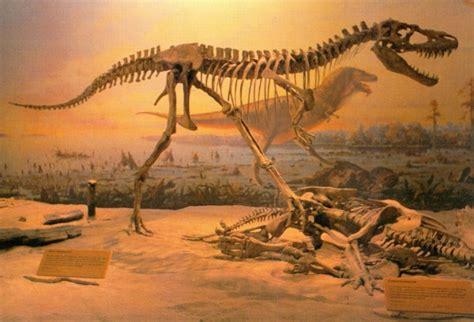albertosaurus bones