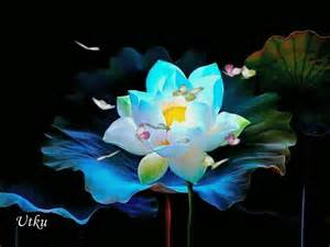 Lotus Animated Gif Flowers Gifs Find On Giphy