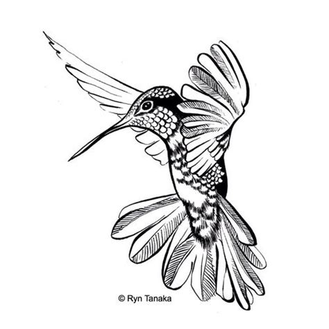 hummingbird rubber st 37 best hummer color images on coloring books