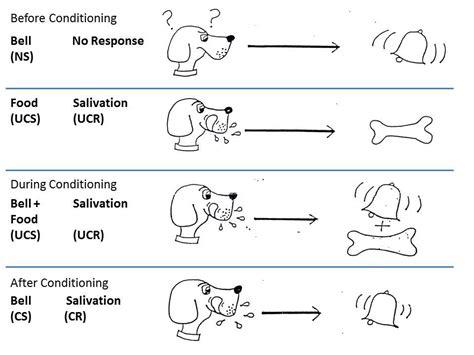 pavlov experiment pavlov s dogs simply psychology