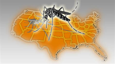 mosquito map usa in the u s the asian tiger mosquito mosquito