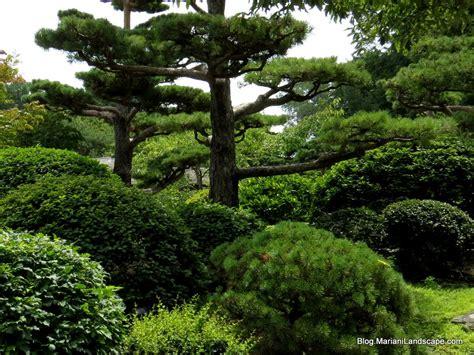 image gallery japanese garden plants shrubs