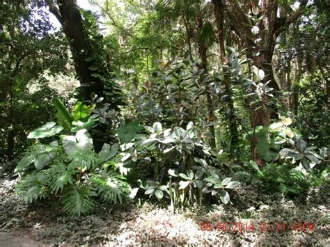 Sugar Mill Botanical Gardens Sugar Mill Botanical Gardens Picture Of Dunlawton Sugar Mill Gardens Port Orange Tripadvisor