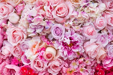 imagenes de rosas multicolores 191 qu 233 significa so 241 ar con flores floraqueen