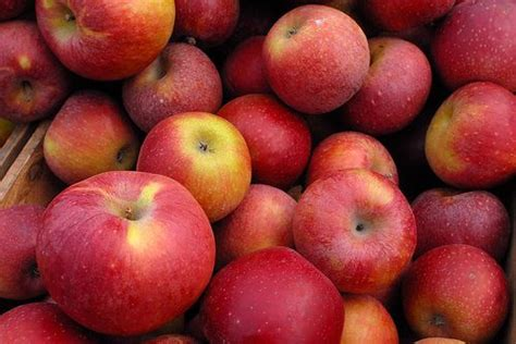 alimento fa dimagrire dimagrire con aceto di mele dietas metabolismo y alimentos