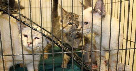 pet r humane society pound animals ready to adopt