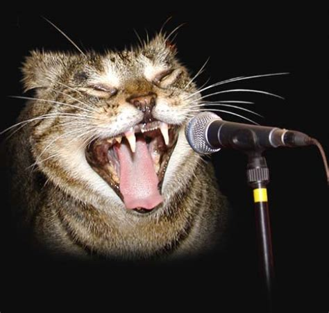 Singing Cat Meme - limp bizkit ribbon off my eyes