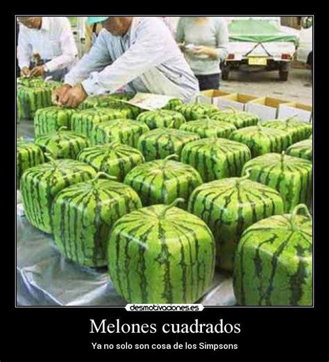 melones cuadrados desmotivaciones - Melones Cuadrados
